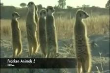 Tiere in der Steppe