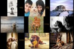 Dog-Photographer-of-the-Year-2016---Hund-Fotograf.ppsx auf www.funpot.net