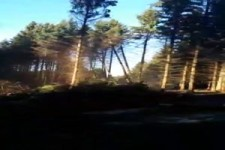 Domino-Effekt beim Baumfällen