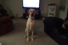 dressierter Hund