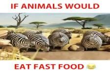 Fette Tiere
