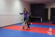 Der sportliche Hund