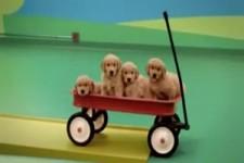Hunde Domino