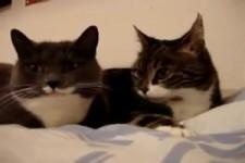 Pläuschchen unter Katzen