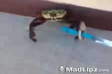 VIDEO - türkische Krabbe
