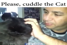 Please cuddle the cat...