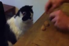 Hütchenspiel mit Katze
