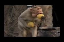 Lustige Affenbande