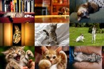 Cat-Life-3---Katzenleben-3.ppsx auf www.funpot.net