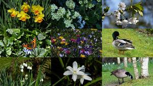 Siesta - Blumen und Tiere