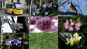 Le printemps est arrivé - Es ist Frühling