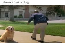 Traue keinem Hund