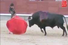 Matador Fail Bull Fighter Torero