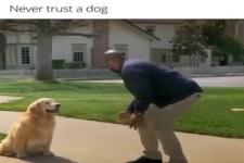 Traue nie einem Hund