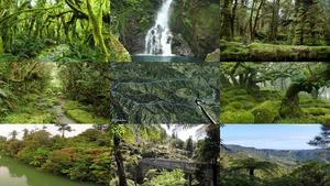Neuseleand Nationalpark