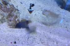 Kampf im Aquarium