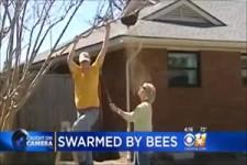 so sollte man kein Bienen-Nest entfernen