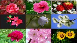 Fleurs & Co - Blumen & Co