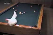 Frohe Ostern - Best Pool Shot by a Chick