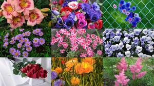 Blumen 24