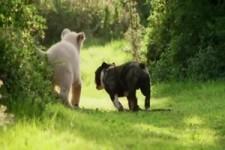 Wie Tiere zusammenleben
