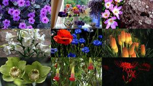 Blumen 26