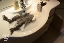 Tiere werden gebadet