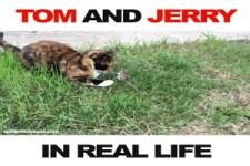 Tom und Jerry im wahren Leben