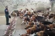 Schlussverkauf für Hunde