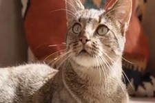 Katzenfrass