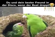 Wenn der Beat droppt