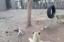 Streit um Nahrung