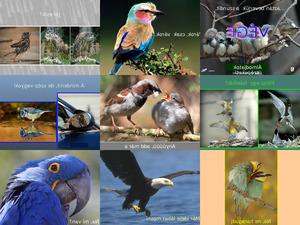 Wunderbare Vogelwelt2