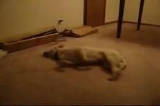 Hundewahnsinn