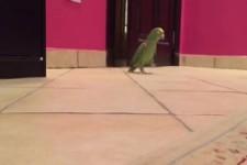 Cooler Papagei