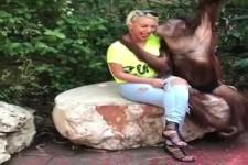 Orangutan - Gentleman