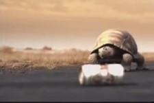 Pfiffige Schildkröte mit Bierdurst