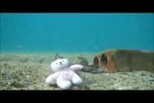 Octopus spielt mit Teddybaer.