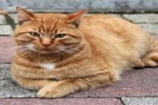 Lebensretter Katze