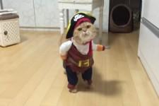 Die Piratenkatze
