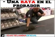 elektrische Ratte