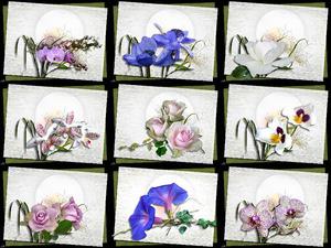 Voice of the Violin - Stimme der Violine (Blumen)