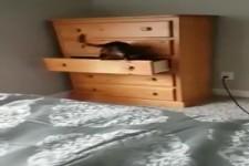 geniales Katzenversteck