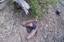 So ein Stress wegen einer Mangrovenkrabbe