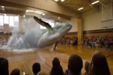 Der Wal in der Sporthalle