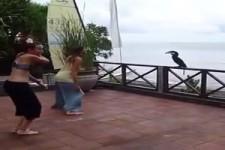 Vogel trainiert mit