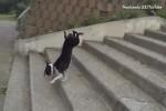 Wie-Hunde-Treppen-bewältigen.mp4 auf www.funpot.net