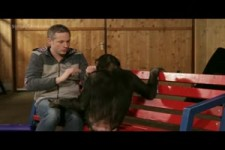 Chimpanzees React To iPad Magic.