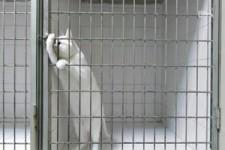 Schlaue Katze