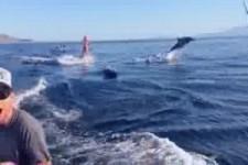 Delfinische  Surfbegleitung